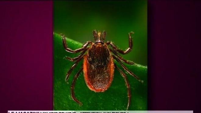 55 000 sont atteintes de la maladie de Lyme en France.