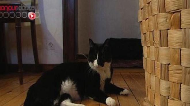 Tabagisme passif : nocif également pour vos animaux de compagnie