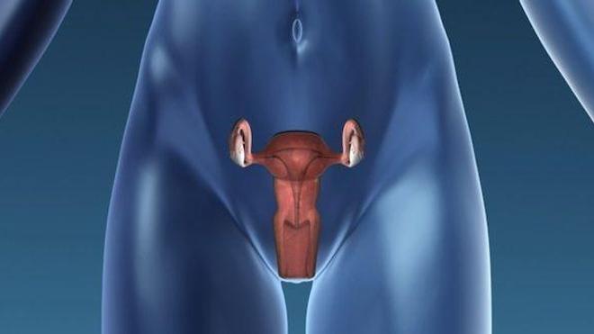 le cancer de l'endomètre est le cinquième cancer le plus fréquent chez la femme