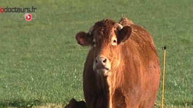 Maladie de la vache folle : un Britannique sur 2.000 serait porteur du prion
