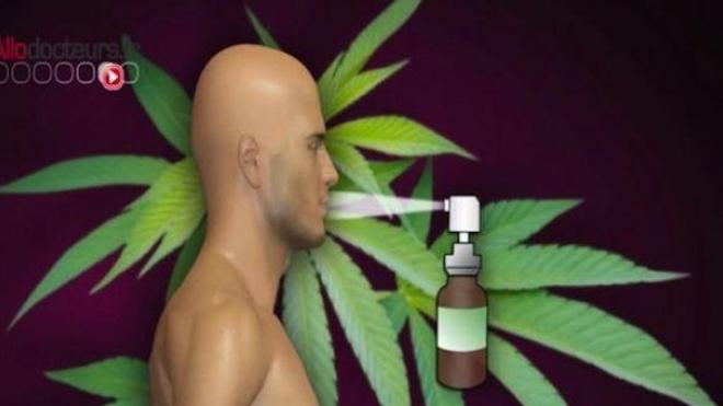 Le Sativex®, un médicament dérivé du cannabis, disponible en 2015