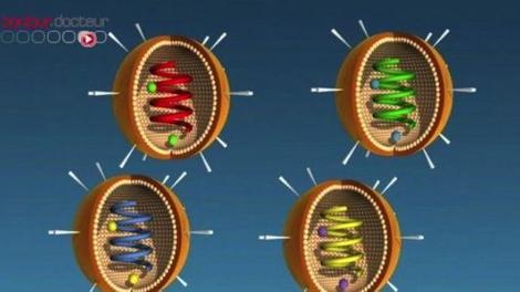 Grippe aviaire : première infection humaine par un virus H6N1 confirmée