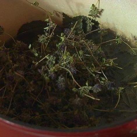 Bien respirer grâce aux plantes