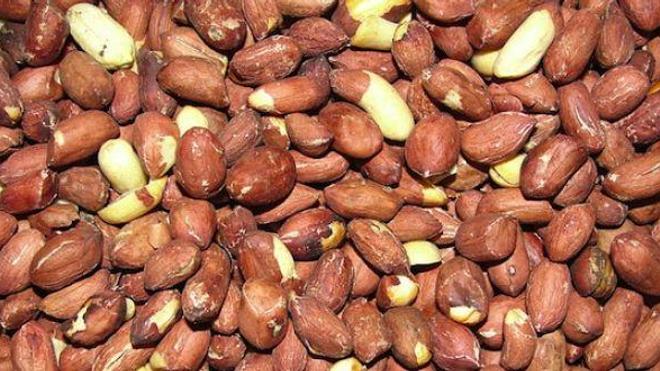 Allergie aux arachides : un nouvel espoir au rayon de l'immunothérapie