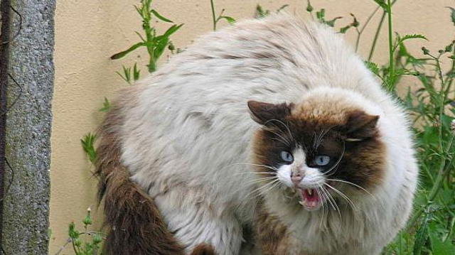 Morsures d'animaux domestiques : ne pas les prendre à la légère