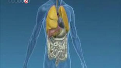 Diabète de type 1 : mise au point d'un pancréas bio-artificiel
