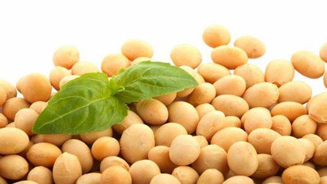 Le soja fait partie intégrante de l'alimentation vegan car riche en protéines