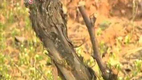 Relaxe en appel du viticulteur bio qui refusait de traiter ses vignes