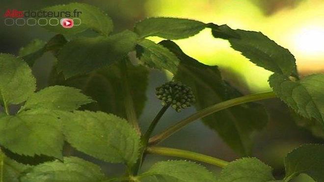 Retrouver du tonus grâce aux plantes