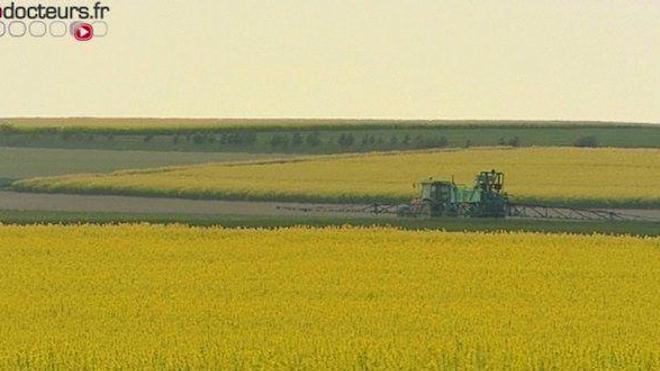 Ségolène Royal prévoit d'interdire l'épandage aérien de pesticides