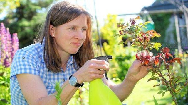 Pesti'home : première étude nationale sur l'exposition aux pesticides ménagers