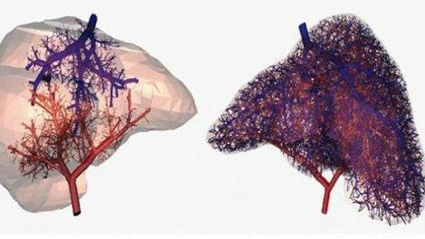 Les vaisseaux sanguins s'impriment désormais en 3D