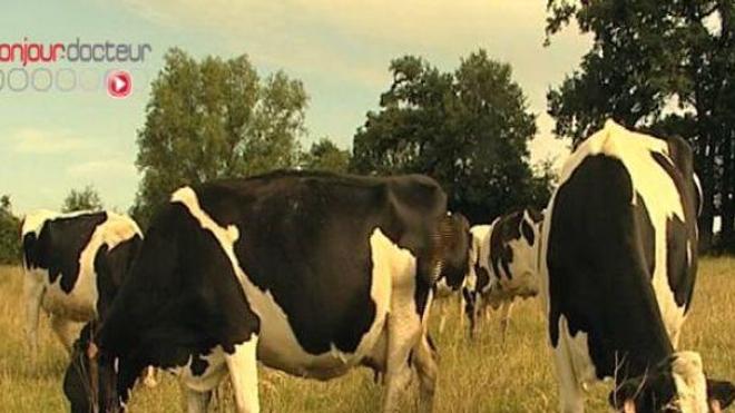 Le bovin est mort début juin de la maladie de la vache folle (Image d'illustration)