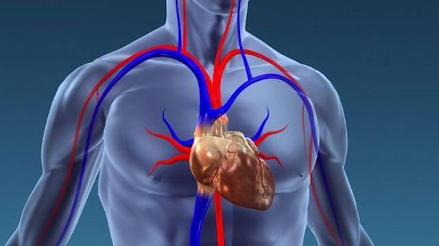 Les maladies cardiovasculaires tuent 4 millions de personnes par an en Europe