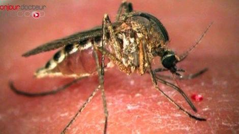 Dengue : premier cas autochtone dans le Var