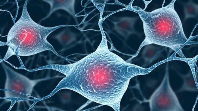 L'autisme, un excès de synapses en cause ?