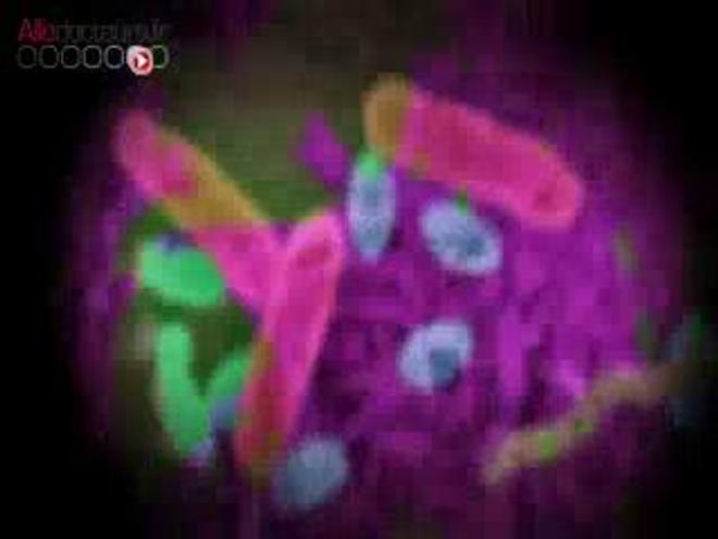 Image : un ver plat ''Dugesia subtentaculata'', très proche cousin du ''Dugesia japonica'' étudié par les chercheurs du CNRS. (cc-by-sa Eduard Solà) - Vidéo : reportage du 12 janvier 2015