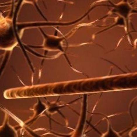 Révision de la loi bioéthique : la question des neurosciences