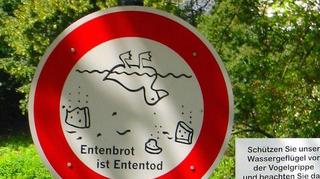 Qu'est ce que la grippe aviaire H5N8, qui sévit en Europe ?