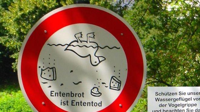 Dans un parc de Düsseldorf, un panneau interdisant de nourrir les oiseaux pour prévenir les rassemblements d'animaux, et ainsi réduire les risques liés à la grippe aviaire. (cc-by-sa Witoki)