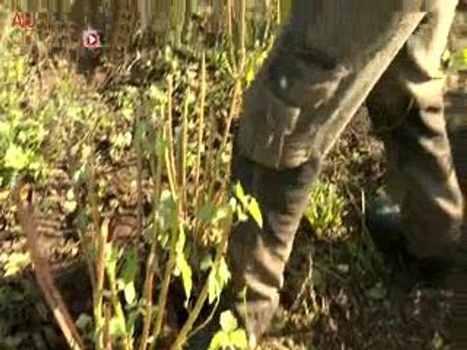 Sylvie cultive le radis noir et les racines de guimauve dans son jardin et les transforme en sirops et en tisanes.