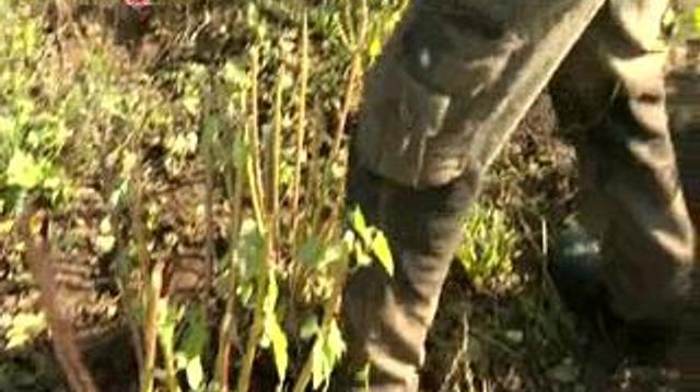 Racines de guimauve et radis noir contre les maux de l'hiver