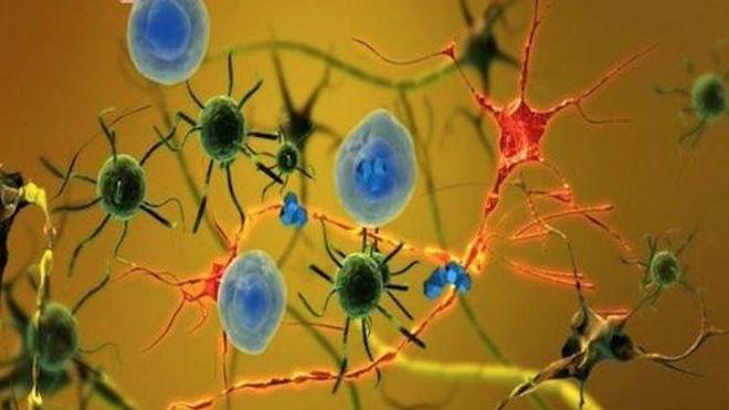 Parkinson : des singes retrouvent des capacités motrices après une greffe de cellules souches humaines