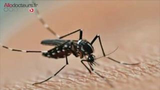 Dengue et chikungunya s'implantent en France métropolitaine