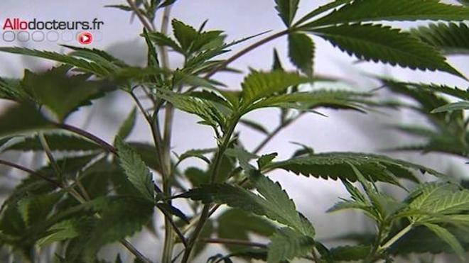 La consommation régulière de cannabis a augmenté de 41 % en 4 ans.