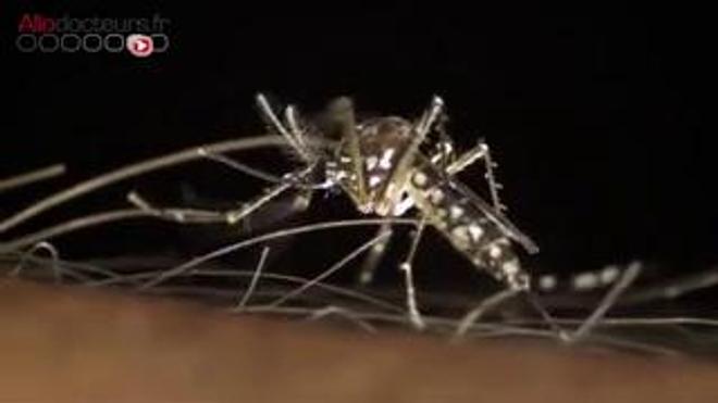 Le vaccin contre la dengue de Sanofi Pasteur - Reportage du 28 septembre 2015