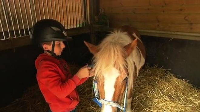Médiation animale, zoothérapie : se soigner au contact des animaux