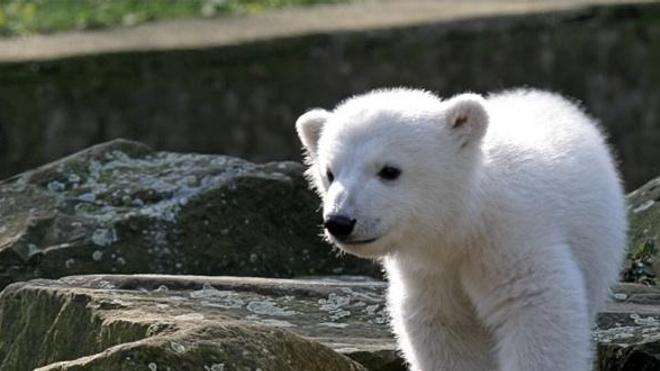 L'ours est mort à l'âge de 4 ans d'une encéphalite auto-immune.
