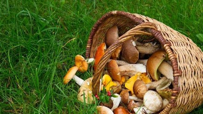 Une quarantaine de champignons véneneux sont répertoriés en France