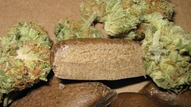 Cannabis en herbe et en résine