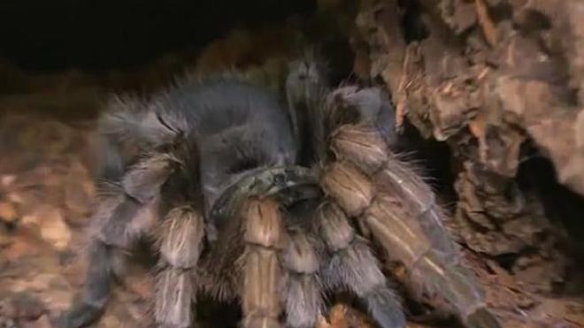 Phobies, morsures... Quand l'araignée devient un cauchemar