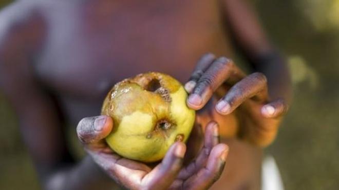 Insécurité alimentaire : 420.000 décès annuels dans le monde