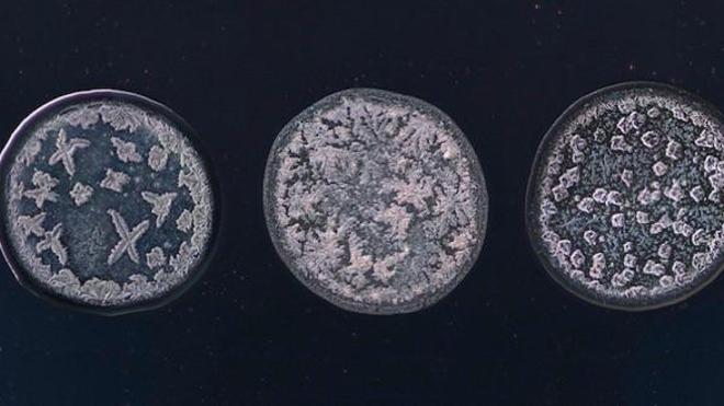 Trois microphotographies réalisées par Maurice Mikkers (tous droits réservés à l'artiste).