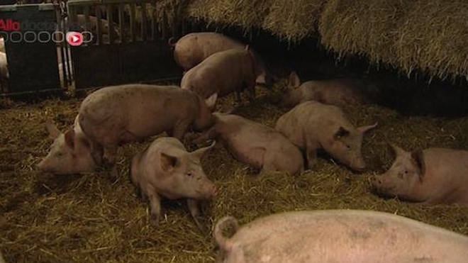 Le Parlement européen veut réduire les antibiotiques dans les élevages