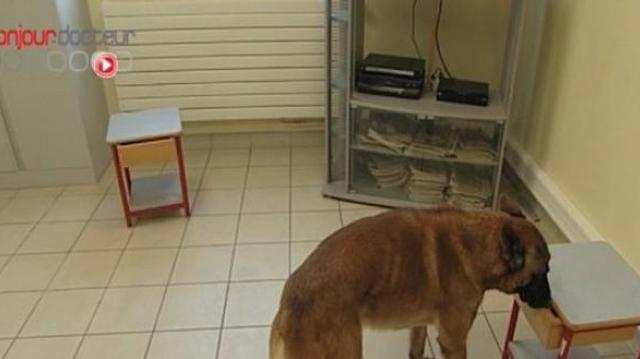 Angus, le chien chasseur de bactérie