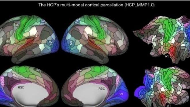Cartographie du cerveau ©Nature