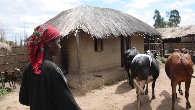 Malawi - Image d'illustration (International Livestock Research Institute via Visualhunt / CC BY-NC-SA)