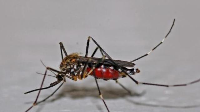 Dengue : premier mort en Nouvelle Calédonie