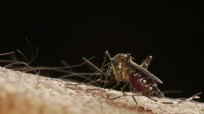 Dengue : La Réunion déclenche le niveau 4 du plan Orsec