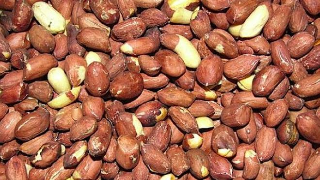 Patch contre l'allergie à l'arachide : une annonce trompeuse ?