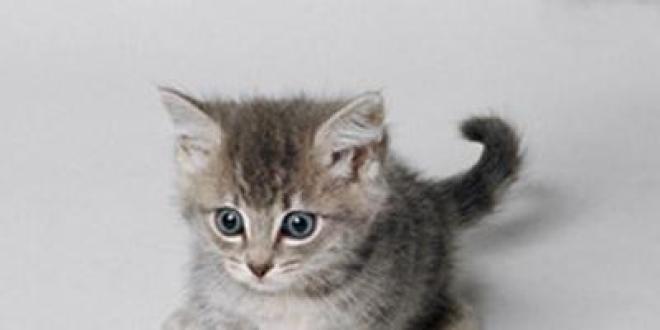 Un chaton en photo et ça repart !