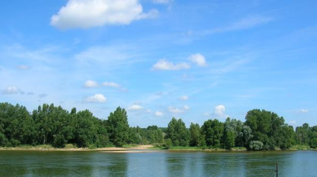 Cyanobactéries toxiques : la pêche interdite dans la Loire