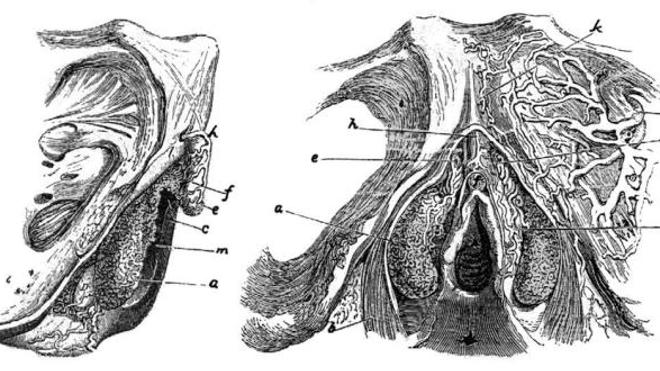 Le clitoris, histoire d'une omerta