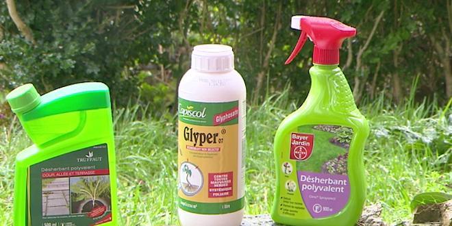 Des produits de jardinage incorporant la molécule glyphosate. La substance chimique est entrée dans le domaine public depuis 2000.