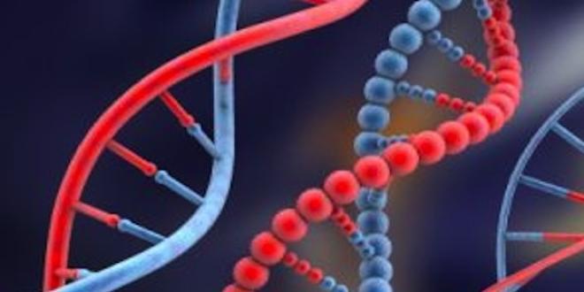 Le risque pour un père d'être à l'origine d'une mutation génétique augmente avec l'âge
