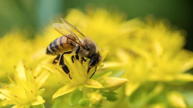 Les pesticides de la famille des néonicotinoïdes sont en passe d'être interdits en France.